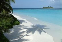 Tenger pálmafa fehér homok...