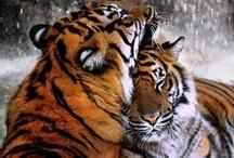 wild animals / by Keri Hines