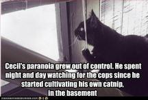 Cat humor / by Caitlin Matchett