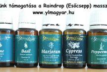 Raindrop (Esőcsepp) masszázs