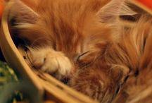 Kawaii Funny Cats