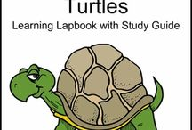 turtles for lapbook