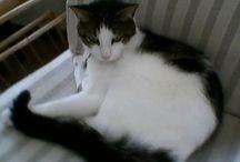 My katte-kind