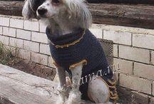 вязание для собаки
