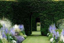 Blue and white garden