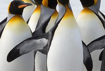 Bea pinguïns