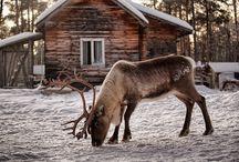 Winter / by Romy Mamer