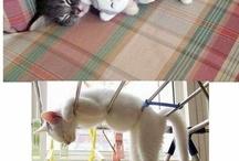 Katt ...