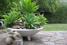 Yucca garden idea