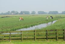 Dutch Nature / Explore Dutch beautiful nature. It is SO worth it!
