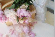 Kwiaty / Piękne kwiaty, które są ozdobą każdego wnętrza