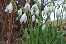 Weisses Beet - White boarder / die Pflanzen im weissen Beet