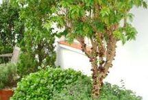 árvores em vazo