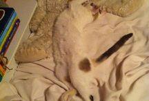 Masha / My cat is all i love