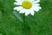 Natural flower / by Dwi Widyajayantie