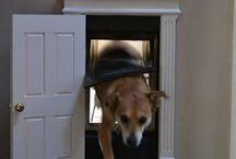 honden ding !