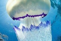 Onderwater monsters / Zeemonsters