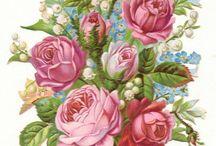 Эскизы Цветы