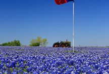 The Lone Star State / Everything Texas! / by Lone Star Park at Grand Prairie