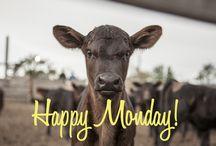Cows we love!
