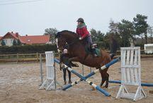 Horse *-*