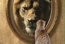 Zelfkennis en zelfbewustzijn