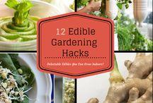 Edible gardening / Grow your own food in your Walthamstow garden.