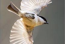 Bird Reference