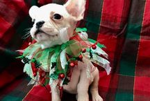 CHRISTMAS ELF by Mandanna Dogs / Cheeky Little Frenchie Elf
