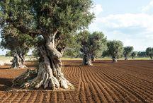 Puglia best