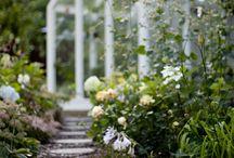 Puutarhaunelmia / Kaikkea kaunista. Vihreää, kukkivaa, rustiikkia ja romuakin.