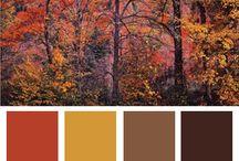 가을 컬러