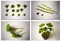 Mini Tutes Plants