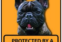 Frou-Frou's French Bulldog Pinterest Page / De leukste hond om te hebben, een Franse Bulldog (French Bulldog)
