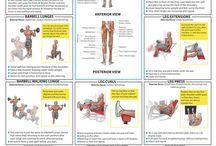fetness hareketleri / vücut geliştirme programları