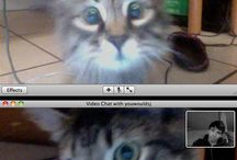 FaceTime a cat is a teens best friend / Cat FaceTiming owner