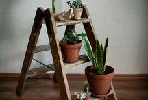 Zimmerpflanzen / In der Gestaltung von Wohnräumen dürfen Zimmerpflanzen nicht fehlen!