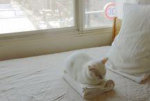 cat / 大好きな猫とかキツネとか♡