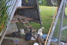 chook sheds