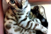 kitty I want / by tascha Katz