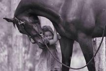 Horses in black and white / I love black and white photos.