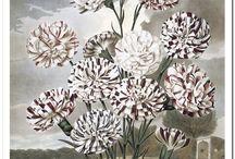 картинки любовь к ботанике
