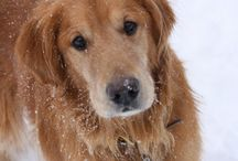 Dog Health / Dog health, cancer, prevention, healing, natural treatments