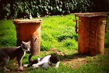 Traditional Beekeeping.... Παραδοσιακή Μελισσοκομία / Κρατώντας τα χνάρια της παράδοσης.....