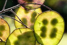 Seed Pods / Natures wonder