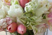 flowers / by Gwen Jones
