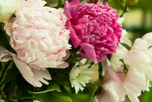 Peonies & more / Peonies come first but I love all flowers, gardens and arrangements