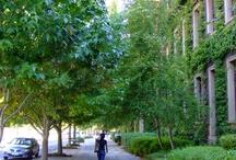 UCT University
