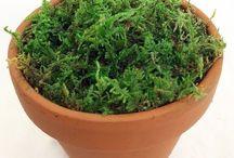 Terrarium & Fairy Garden Moss