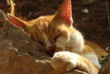 Mallorca (stray)cats by Geminiature / (Stray) cats on Mallorca